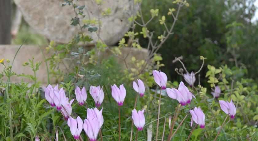 פרחים מלון יד השמונה